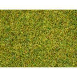Grass summer meadow.
