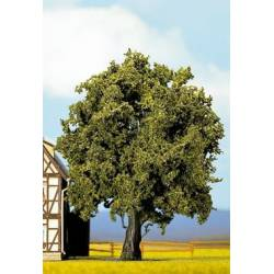 Oak. NOCH 21760