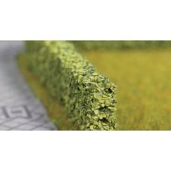 Model hedge. NOCH 21522