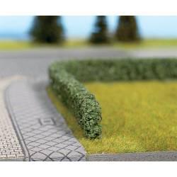 Model hedge. NOCH 21524