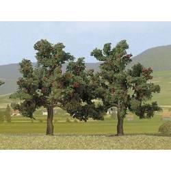 2 Apple trees.