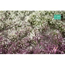Flores en verano. SILHOUETTE 726-33S