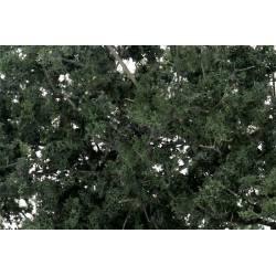 Fine-leaf foliage dark green. WOODLAND F1130