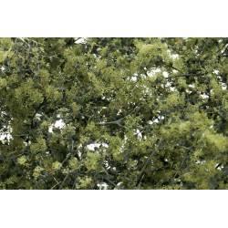 Fine-leaf foliage olive green. WOODLAND F1133