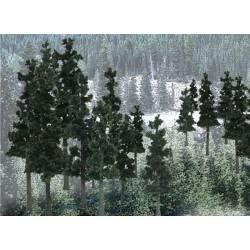 Conifer colors.