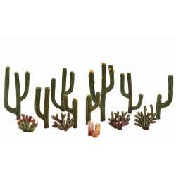 13 cactus.